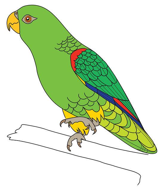 Kako nacrtati papigu